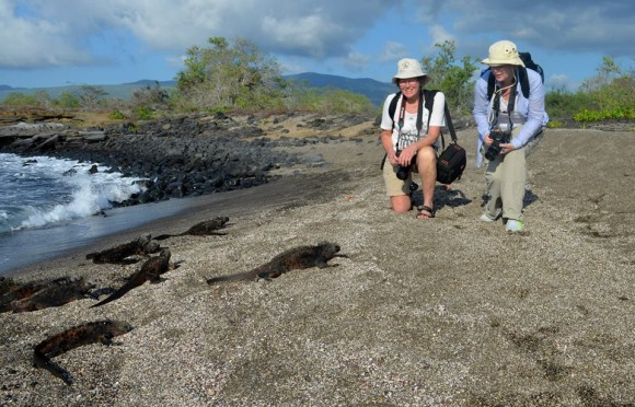 Galapagos Santa Cruz II Iguanas