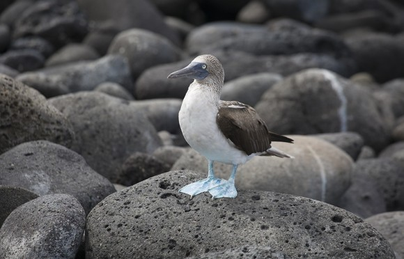 Naturaleza Galapagos