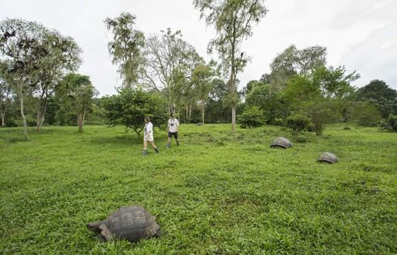 Galapagura