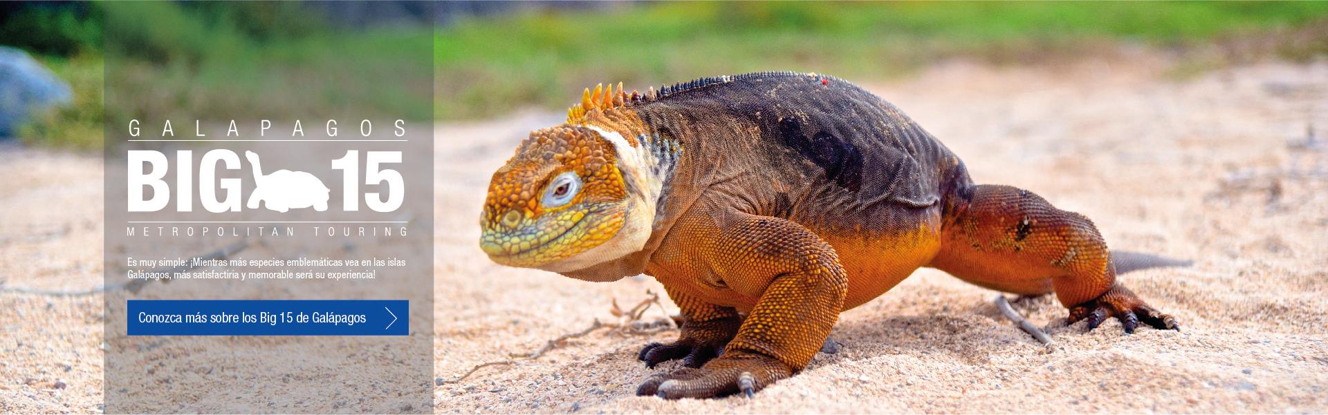 Galapagos - Big 15