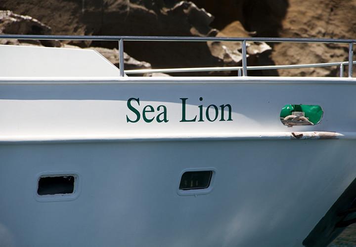 Sea-Lion_137546425090