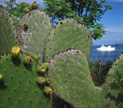 Galapagos Flora